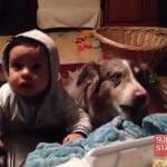 おもしろ動画 「ママって言って」必死すぎる犬が仰天行動ww