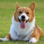 【犬の病気】てんかんの前兆と症状、発作時の対応は?