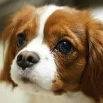 犬との避難時に持っていくべき持ち物は?大事なのは普段の対策