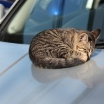 【画像】猫バンバンとは?冬に猫が起こす行動で悲劇が!