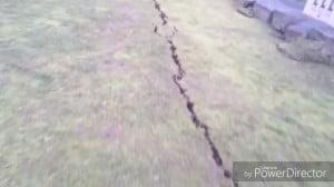 地震熊本城5