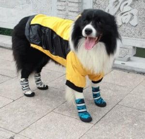 犬避難袋3