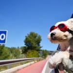 運転中の日焼け止め対策!車の紫外線カットのおすすめと貼り方