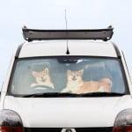 【車の日除け】 フロントガラス用のカーシェードは100均でもOK?