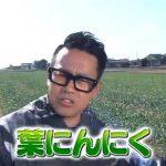 青空レストラン「葉にんにく」高知県の伝統野菜!通販お取り寄せ情報!