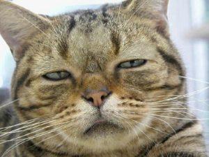 疑いの目猫